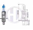 Hauptscheinwerfer Glühlampe LID10065 Clio III Schrägheck (BR0/1, CR0/1) 1.5 dCi 86 PS Premium Autoteile-Angebot